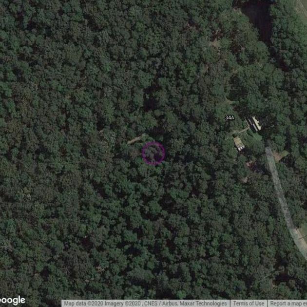 Stewart #2 Rainforest Creek