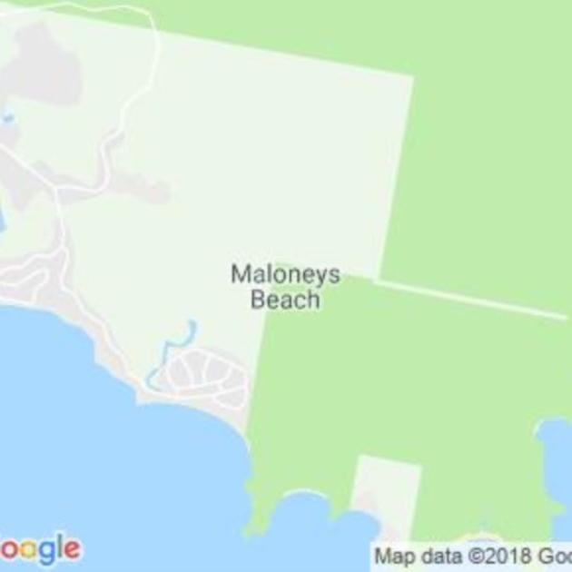 Maloneys Beach, NSW field guide
