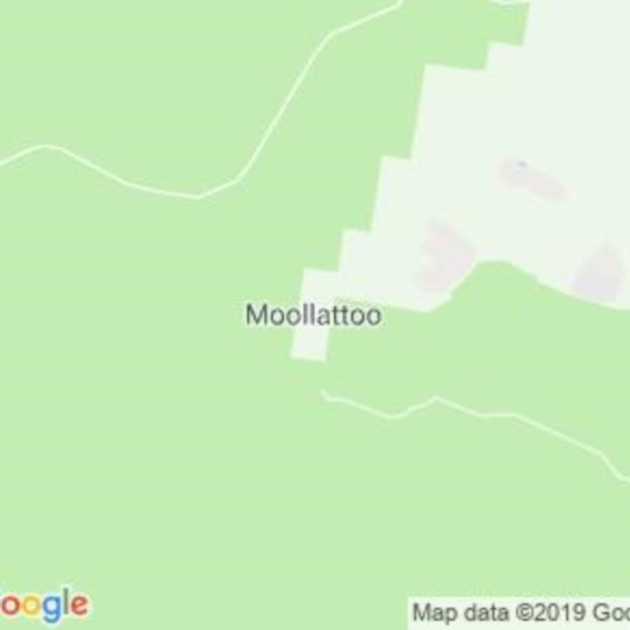 Moollattoo, NSW field guide