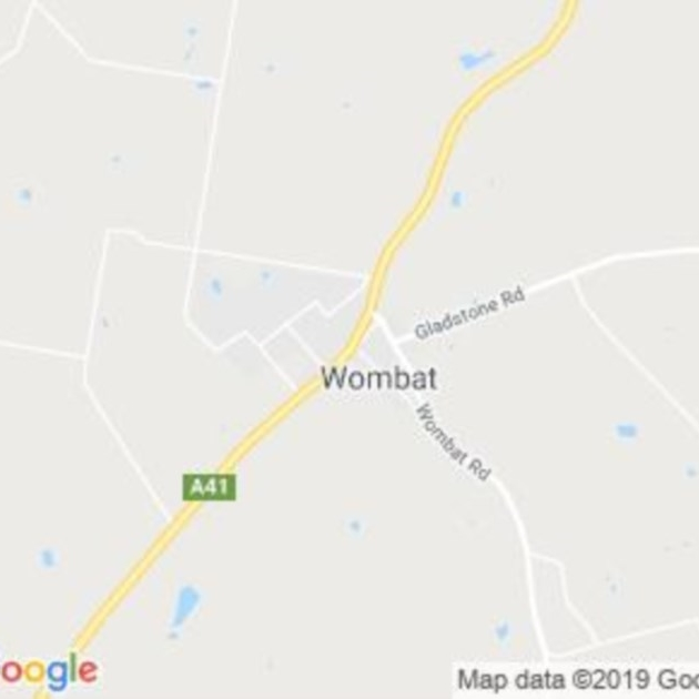 Wombat, NSW field guide