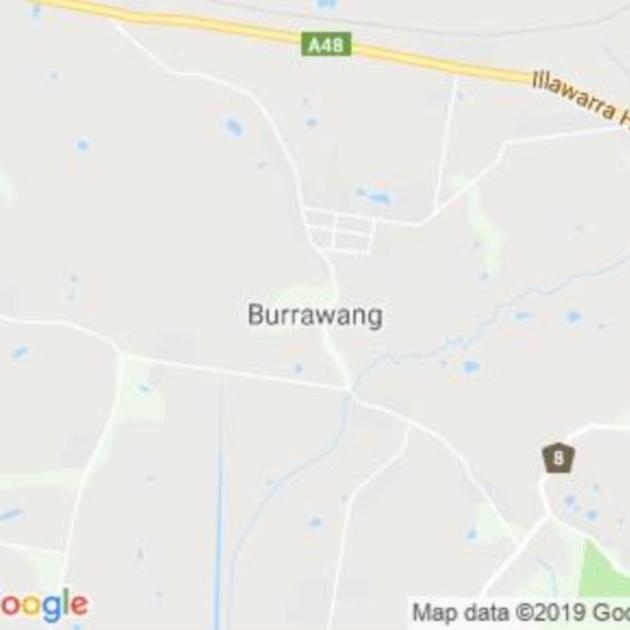 Burrawang, NSW field guide