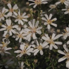 Olearia microphylla (Olearia) at Bruce, ACT - 4 Sep 2015 by pinnaCLE