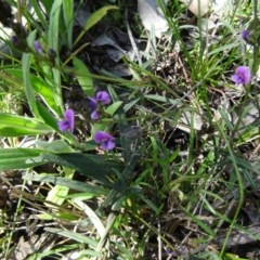 Hovea heterophylla (Common Hovea) at Mount Painter - 20 Sep 2015 by galah681