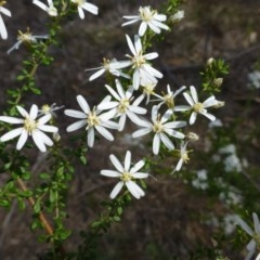 Olearia microphylla (Olearia) at O'Connor, ACT - 14 Sep 2014 by RWPurdie