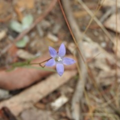 Wahlenbergia sp. (Bluebell) at Bungonia National Park - 16 Apr 2016 by RyuCallaway
