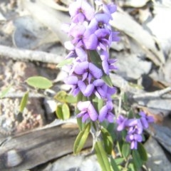 Hovea heterophylla (Common Hovea) at Mount Taylor - 30 Aug 2008 by MatthewFrawley