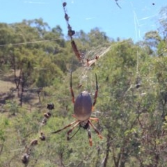 Nephila edulis (Golden orb weaver) at Red Hill Nature Reserve - 26 Mar 2017 by Ratcliffe