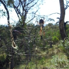 Nephila edulis (Golden orb weaver) at Mount Taylor - 15 Apr 2017 by RosemaryRoth