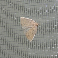 Authaemon stenonipha (Pale-bordered Cape-moth) at Conder, ACT - 11 Apr 2015 by michaelb
