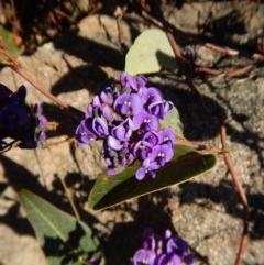 Hardenbergia violacea (False Sarsaparilla) at Mount Painter - 25 Aug 2017 by CathB