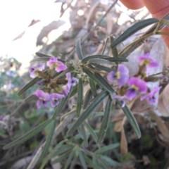 Glycine clandestina (Twining glycine) at Mount Ainslie - 29 Sep 2017 by SilkeSma