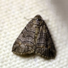 Dysbatus singularis (Dry-country Line-moth) at O'Connor, ACT - 16 Oct 2017 by ibaird