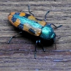 Castiarina scalaris (Scalaris jewel beetle) at Wanniassa Hill - 26 Dec 2017 by YumiCallaway