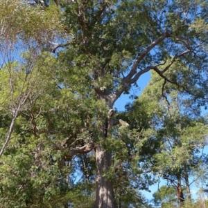 Tree hollow at Brogo, NSW - 19 May 2018
