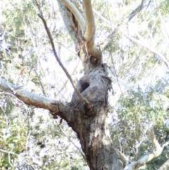 Tree hollows at Conjola Bushcare - 13 Jul 2018 by Stewart