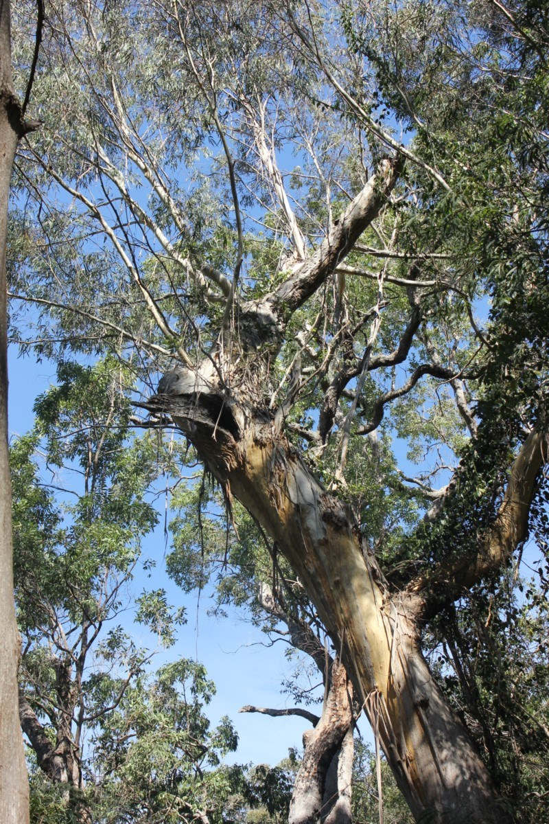 Tree hollows at Monga National Park - 3 Aug 2018