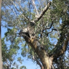 Tree hollows at Monga National Park - 3 Aug 2018 by nickhopkins