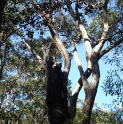Tree hollows at Morton National Park - 3 Aug 2018 by Stewart