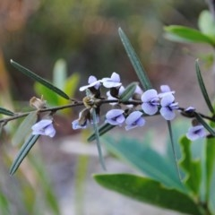 Hovea heterophylla at South Pacific Heathland Reserve - 20 Aug 2015 by Nicholas de Jong