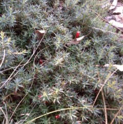 Astroloma humifusum (Cranberry heath) at Mount Taylor - 28 Apr 2015 by George