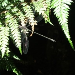 Austroargiolestes icteromelas (Common Flatwing) at ANBG - 21 Jan 2006 by Alison Milton