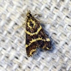 Scoparia spelaea (A Crambid moth) at O'Connor, ACT - 4 Nov 2018 by ibaird