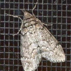 Smyriodes trigramma (Stippled Line Moth) at Undefined - 2 Jun 2018 by jbromilow50
