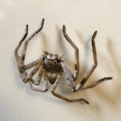Sparassidae sp. (family) (A Huntsman Spider) at Illilanga & Baroona - 20 Oct 2018 by Illilanga