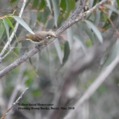Caligavis chrysops (Yellow-faced Honeyeater) at Barren Grounds Nature Reserve - 19 May 2018 by Andrejs