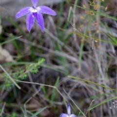 Glossodia major (Wax-lip Orchid) at Bamarang Nature Reserve - 25 Aug 2013 by AlanS