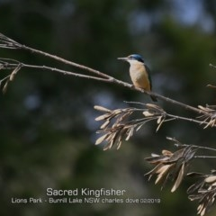 Todiramphus sanctus (Sacred Kingfisher) at Wairo Beach and Dolphin Point - 23 Feb 2019 by Charles Dove
