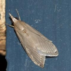 Syntonarcha iriastis (Iriastis Moth) at Higgins, ACT - 13 Mar 2019 by AlisonMilton