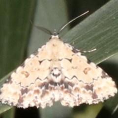 Sandava scitisignata (A noctuid moth) at Ainslie, ACT - 6 Mar 2019 by jbromilow50