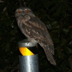 Podargus strigoides (Tawny Frogmouth) at Rosedale, NSW - 29 Mar 2019 by jbromilow50