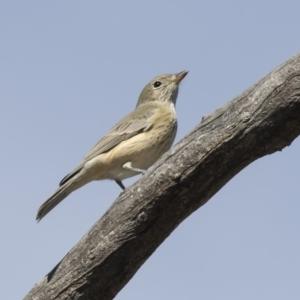 Pachycephala rufiventris at Gossan Hill - 8 Apr 2019