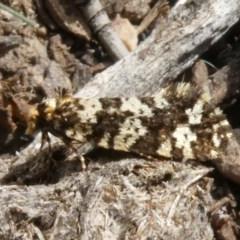 Ardiosteres moretonella (Scruffy Case Moth) at Tuggeranong Hill - 15 Apr 2019 by Owen