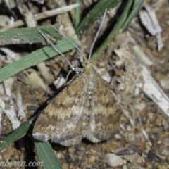 Scopula rubraria (Reddish Wave) at Red Hill Nature Reserve - 3 May 2019 by BIrdsinCanberra