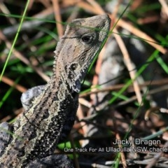 Amphibolurus muricatus (Jacky Lizard) at One Track For All - 7 May 2019 by Charles Dove