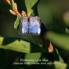 Sahulana-scintillata at Coomee Nulunga Cultural Walking Track - 2 Jun 2019
