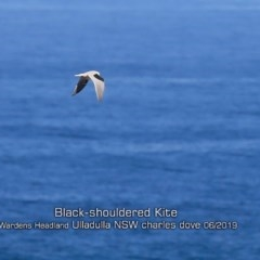 Elanus axillaris (Black-shouldered Kite) at Coomee Nulunga Cultural Walking Track - 2 Jun 2019 by Charles Dove