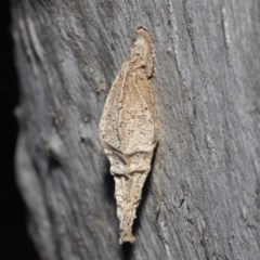 Hyalarcta nigrescens (Ribbed Case Moth) at ANBG - 26 Jun 2019 by TimL