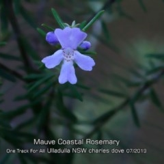 Westringia 'Wynabbie Gem' at One Track For All - 12 Jul 2019 by Charles Dove