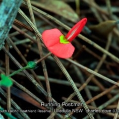 Kennedia prostrata (Running Postman) at South Pacific Heathland Reserve - 12 Jul 2019 by CharlesDove