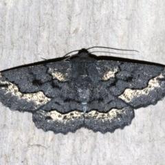 Melanodes anthracitaria (Black Geometrid) at Rosedale, NSW - 13 Jul 2019 by jbromilow50