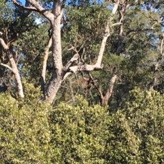 Tree hollows at Batemans Marine Park - 20 Jul 2019 by nickhopkins