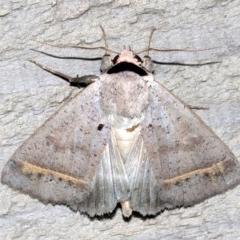Pantydia capistrata (An Erebid moth) at Rosedale, NSW - 25 Feb 2019 by jbromilow50