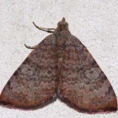 Chrysolarentia mecynata (Meycnata Carpet) at Lilli Pilli, NSW - 11 Aug 2019 by jbromilow50