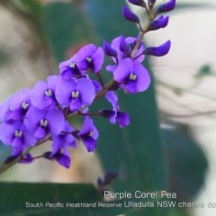 Hardenbergia violacea (False sarsaparilla) at South Pacific Heathland Reserve - 4 Aug 2019 by Charles Dove