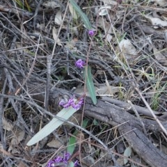 Hardenbergia violacea (False Sarsaparilla) at Red Hill Nature Reserve - 20 Sep 2019 by JackyF
