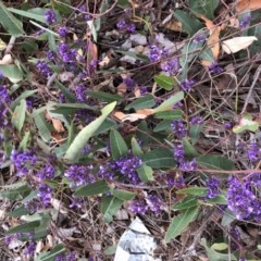 Hardenbergia violacea (False Sarsaparilla) at Hughes Grassy Woodland - 22 Sep 2019 by ruthkerruish